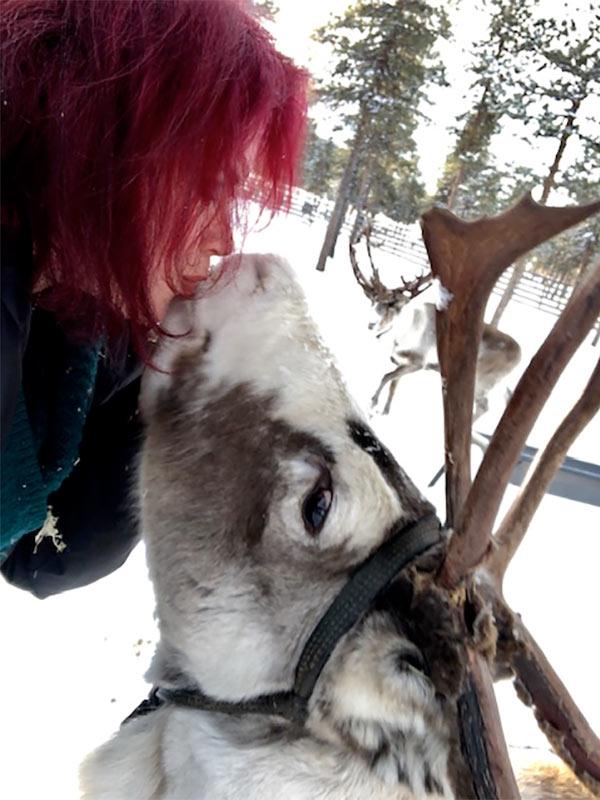lapland_reindeerkiss